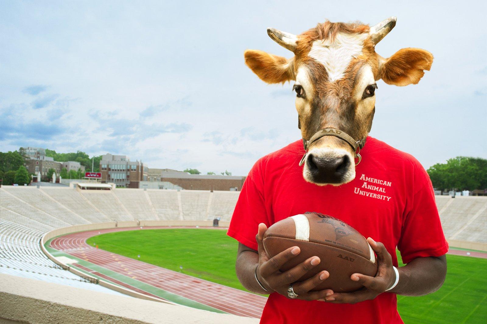 Bull Player