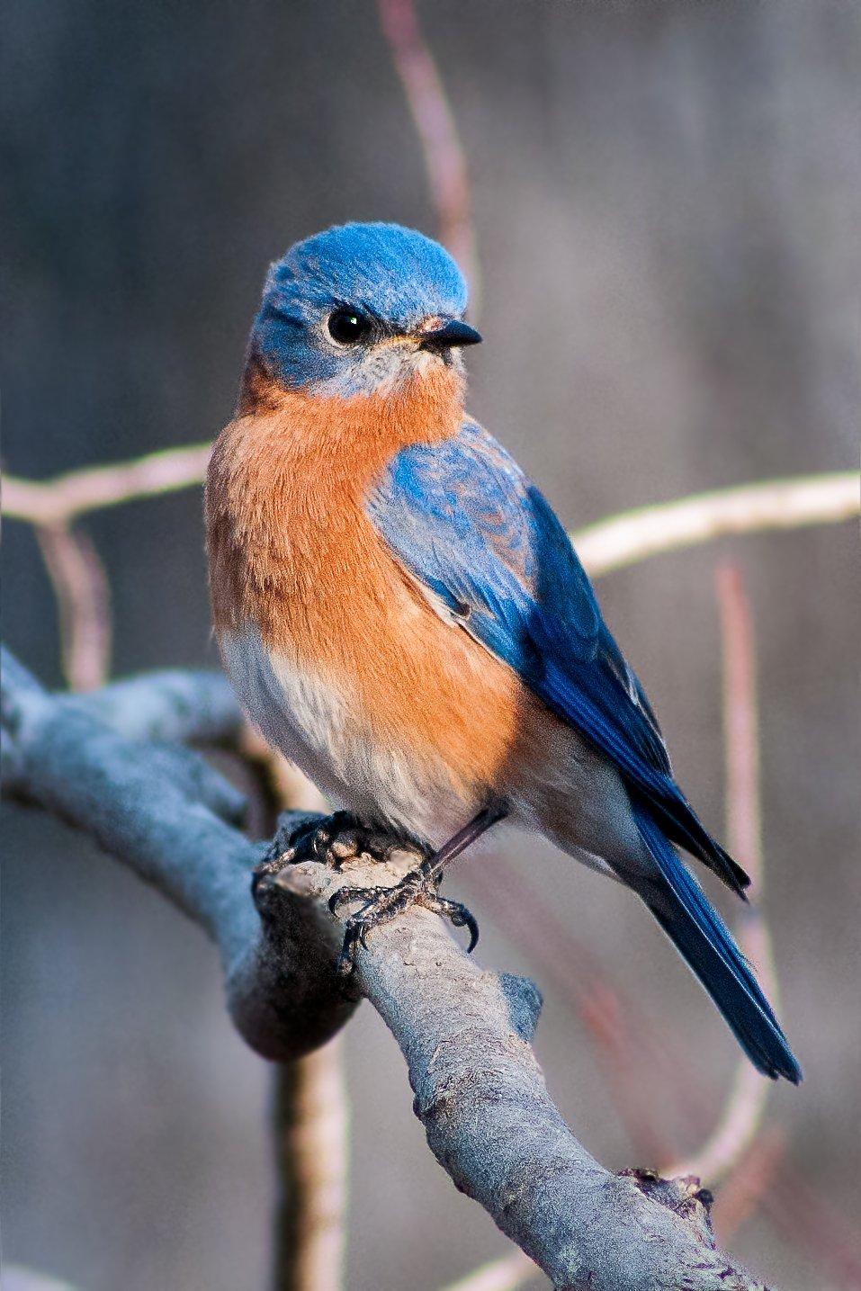 bluebird D7200 2×3 _DSC9785